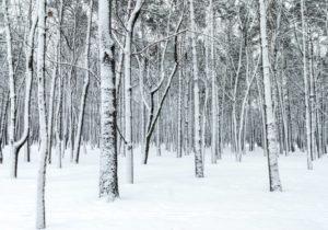 ithaca ny trees